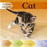 Looking at Lifecycles: Cat
