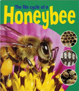 Learning About Life Cycles: The Life Cycle Of A Honeybee