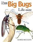 Big Bugs Life-Size