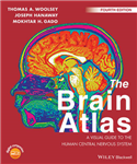 Brain Atlas