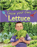 Grow Your Own: Lettuce