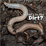 What's in the Soil?