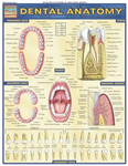 Dental Anatomy: Reference Guide