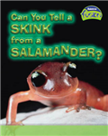 Can You Tell a Skink from a Salamander?
