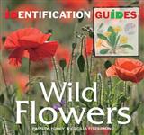 Wild Flowers: Identification Guide