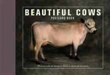 Beautiful Cows Postcard Book