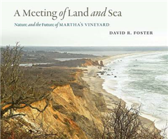 Meeting of Land and Sea