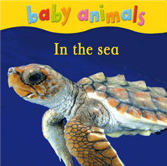 Baby Animals: In the Sea