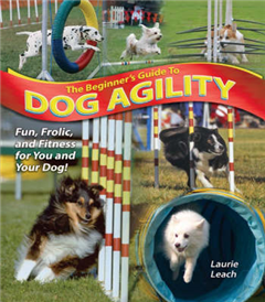 Beginner's Guide to Dog Agility