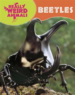 Really Weird Animals: Beetles