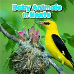 Baby Animals in Nests