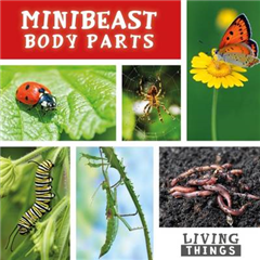 Minibeast Body Parts