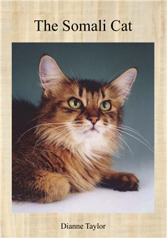 The Somali Cat